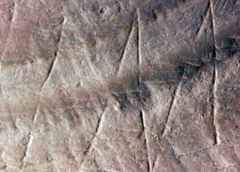 Wim Lustenhouwer/VU University Amsterdam. A shell found on Java in the late 1800s was recently found to bear markings that seem to have been carved intentionally half a million years ago. The photograph is about 15 millimetres wide.